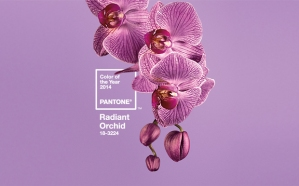Color pantone 2014. Orquidea radiante