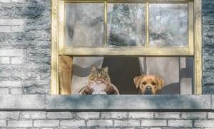 mascotas ventana